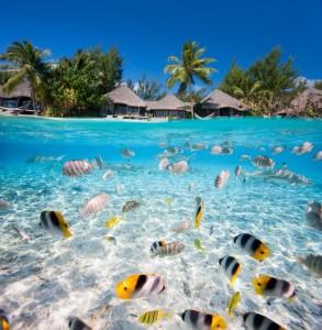 tahiti-and-fish-47424