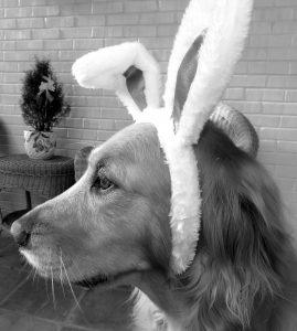 dog bunny